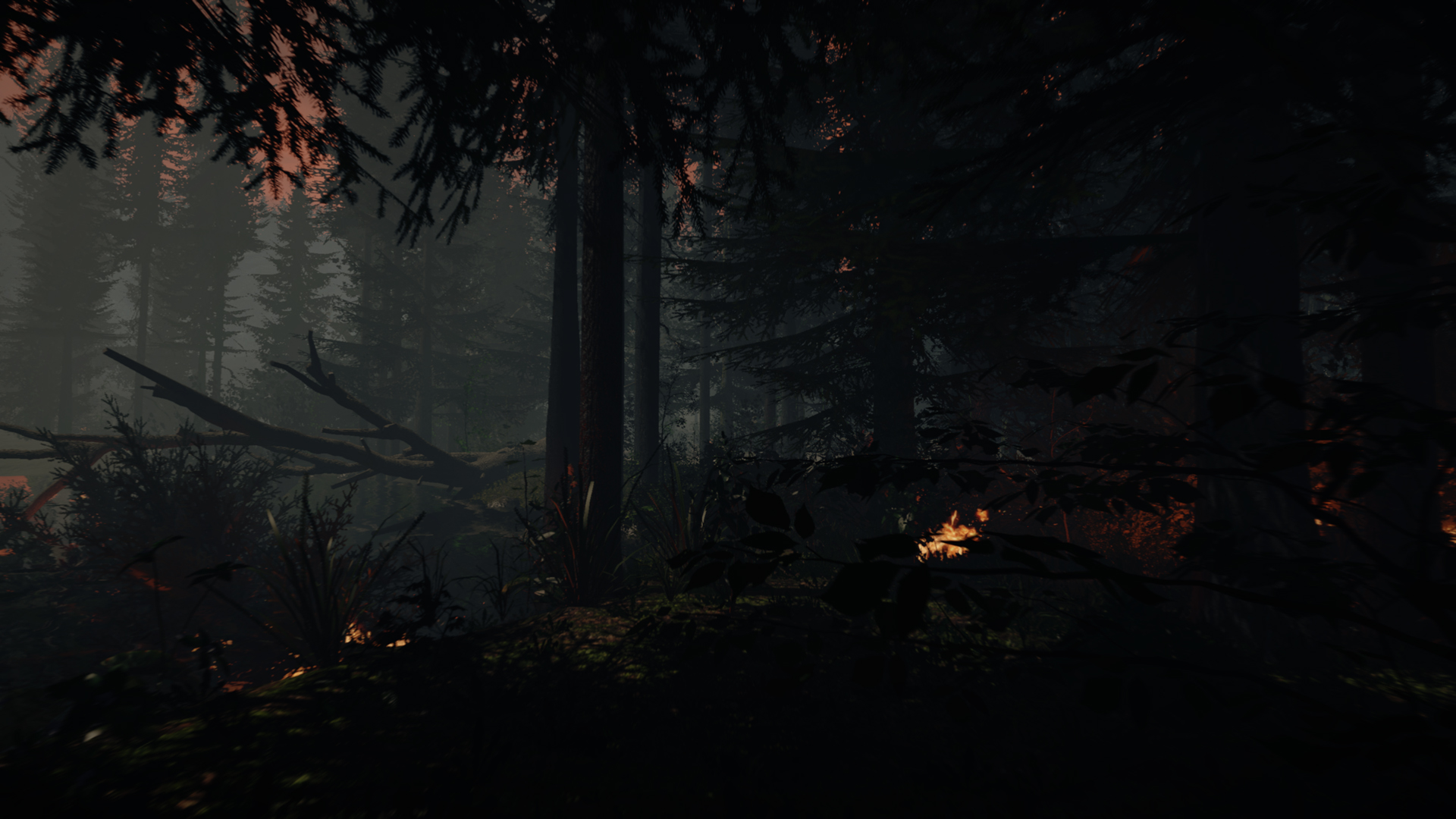 Forest7